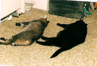 Moureček a Černoušek zaslouženě odpočívají