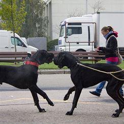 Na evropské výstavě psů s kamarádem