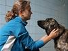 Psi, které přivezli čeští vojáci z Afghánistánu